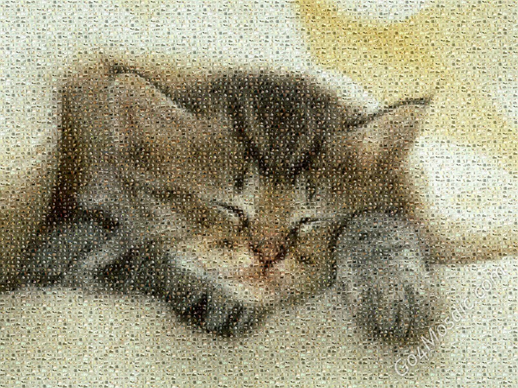 Kitty mosaic from Cats