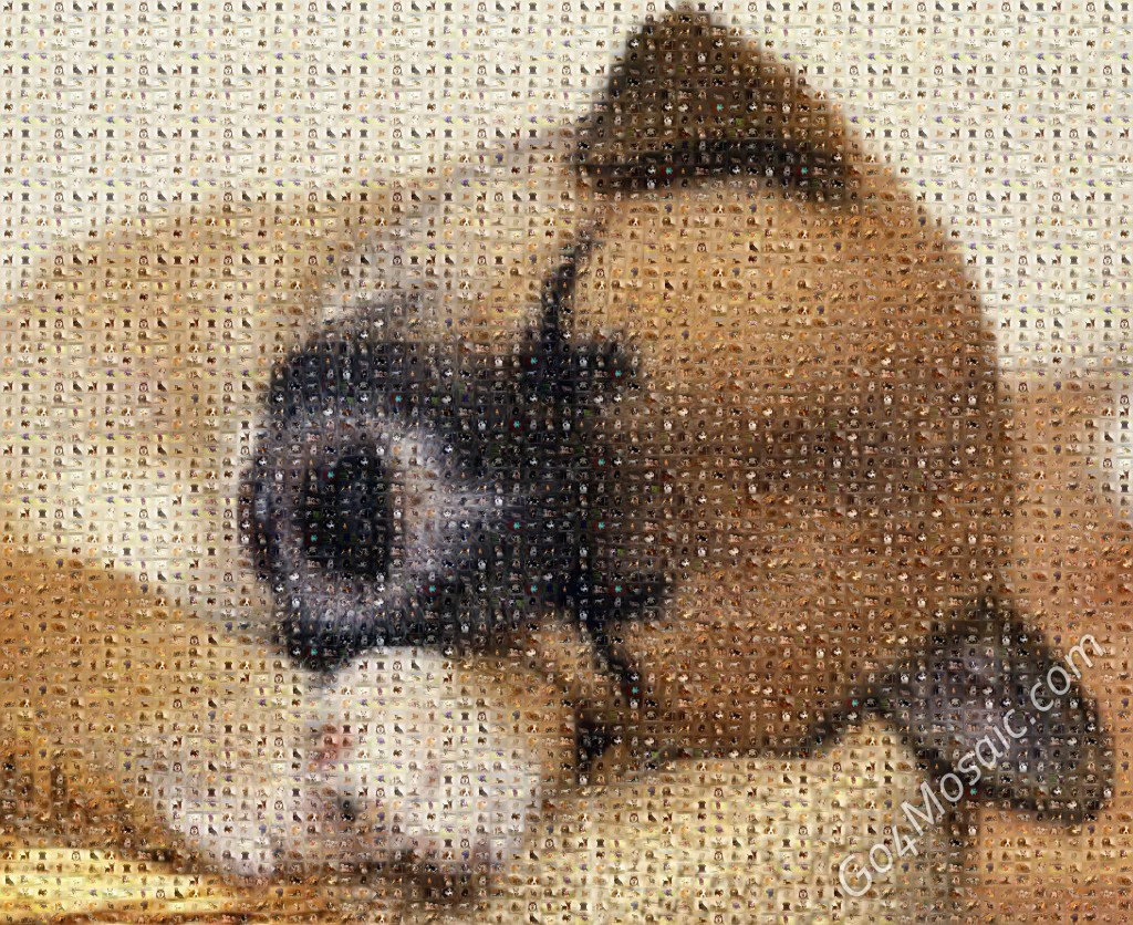 Photo mosaic from Dogs
