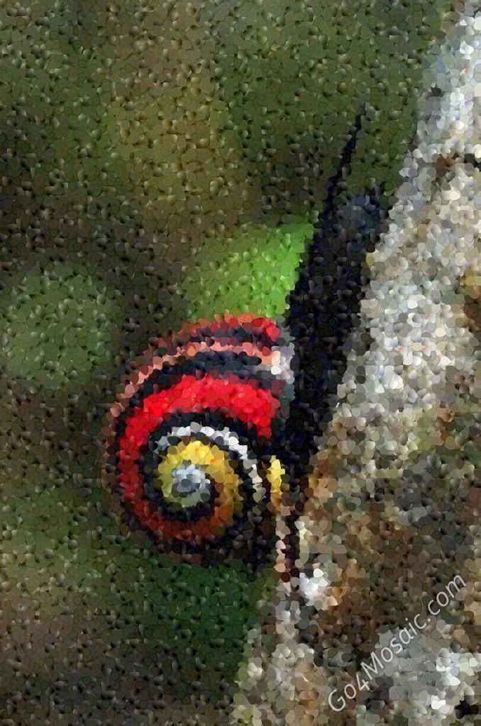 Cuban land snail mosaic from guitar picks