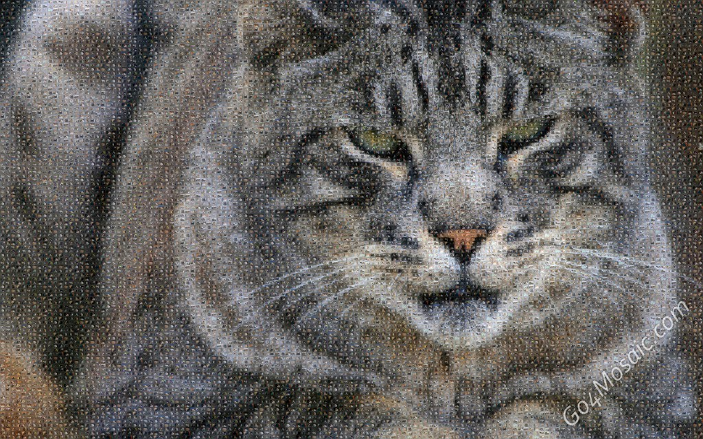 Cat mosaic from cats