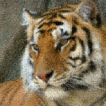 Tiger mosaics from animals - adaptive merging: medium