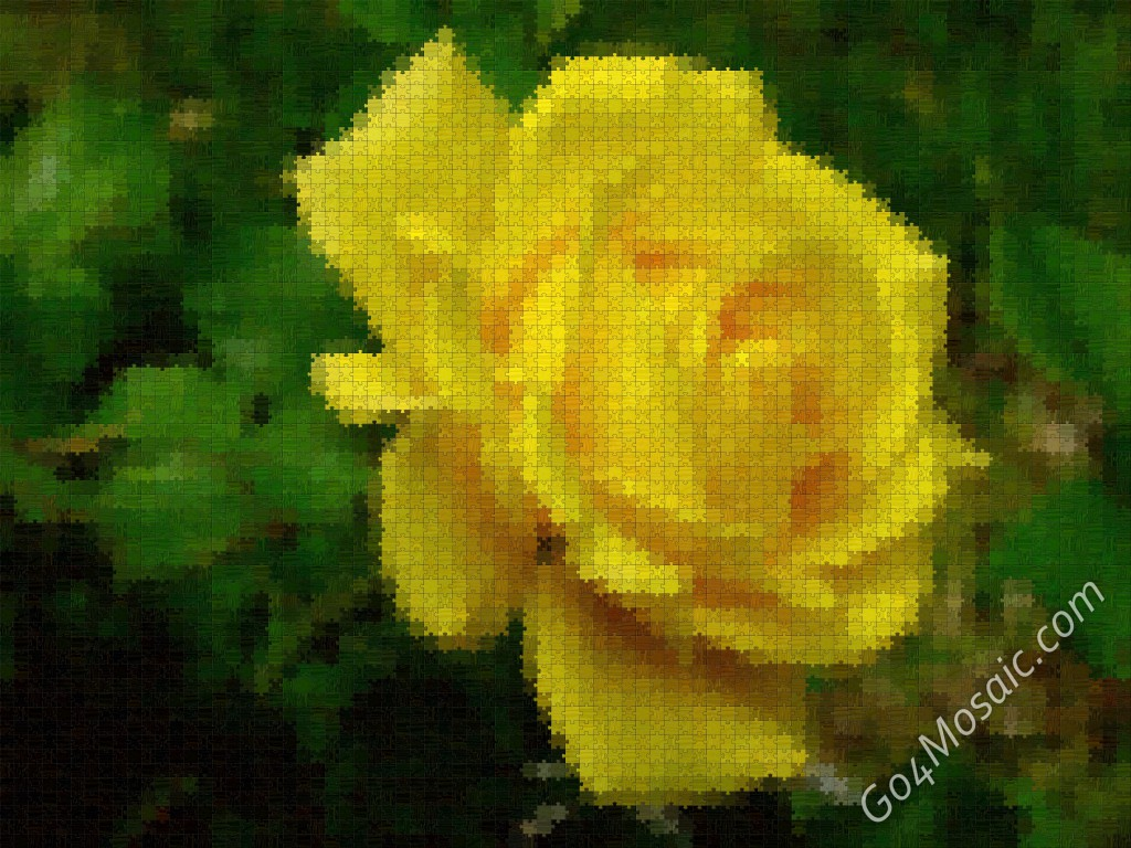 Yellow rose mosaic from jigsaw
