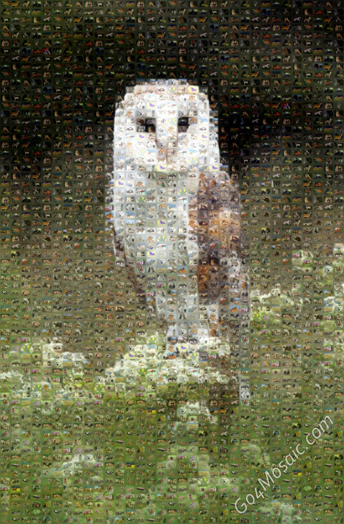 Barn Owl mosaic from Animals